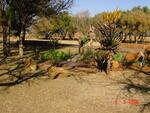 Gauteng, CULLINAN district, Rayton, Kaalfontein 513, farm cemetery_2