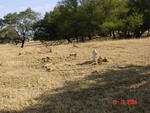 Mpumalanga, BALFOUR district, Lagerspoort, Malanskraal 407, farm cemetery_6