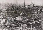 7. View of Delville Wood during the First World War