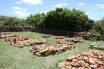 Gauteng, HEIDELBERG district, Suikerbosrand Nature Reserve, Diepkloof 182_1, farm cemetery